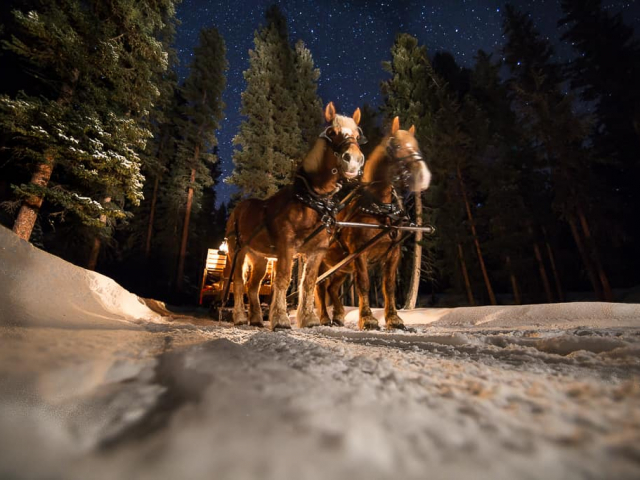 Horse drawn sleigh in the evening, under the stars